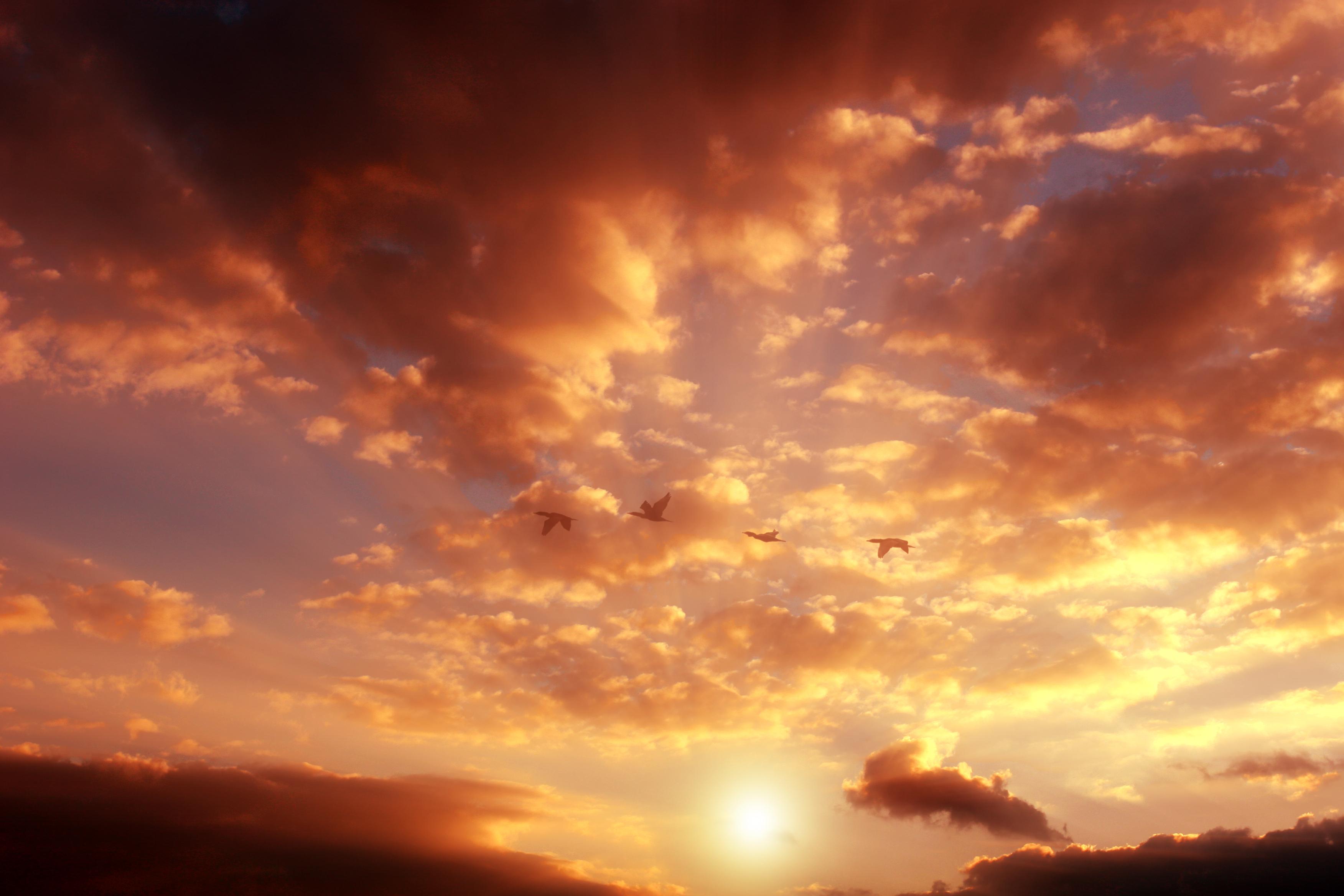 Le ciel les oiseaux et ta femme full story - 4 10
