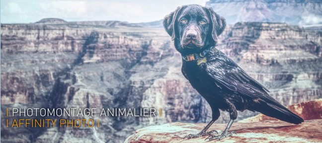 Photomontage Animalier avec Affinity Photo