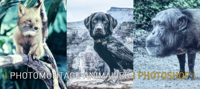 Tuto Photomontage Animalier avec Photoshop Photoshop
