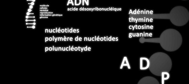 Tuto Molécule d'ADN animée After Effects