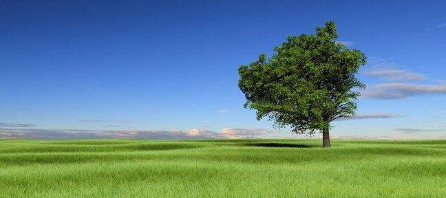 tuto r aliser une tendue d 39 herbe avec un arbre avec blender 2 6 sur. Black Bedroom Furniture Sets. Home Design Ideas